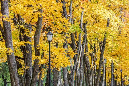 Parkbaumkronen mit leuchtend goldenem Laub und schwarzen Retro-Laternen. Nahaufnahme