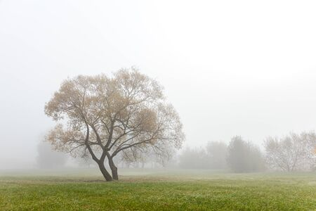 autumnal park scene during foggy weather. trees on cloudy grey sky background. lonely tree on field