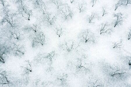 apple orchard in a winter time. winter snowy landscape. aerial view