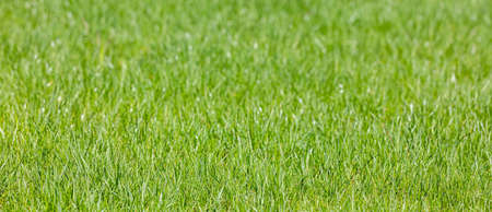 summer natural background with fresh green grass and beautiful bokeh