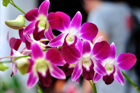 orchids in the garden photo