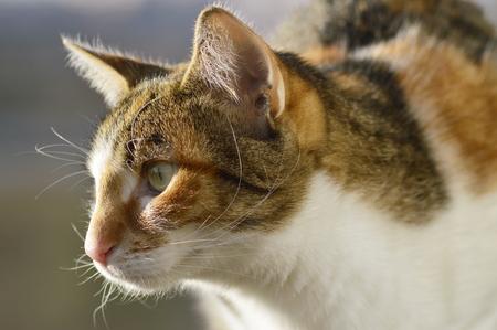 lurk: domestic cat lurk on loot Stock Photo