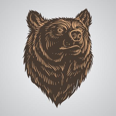 Bear head hand-draw