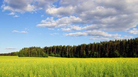 appease: appease summer day belorussian landscape