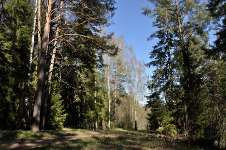 quiet scenery: very nice spring day belorussian forest landscape