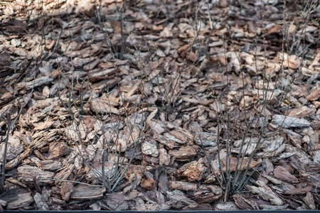 Clean, fresh, pine bark mulch beautifully illuminated by the sun