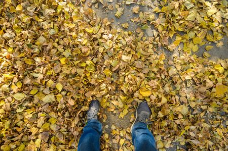 Mens feet in blue jeans and gray sports sneakers on autumn asphalt with yellow fallen leaves. First-person view