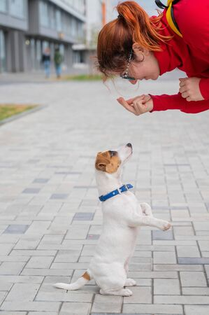 Clever obedient puppy Jack Russell Terrier executes owners commands on the street. A faithful thoroughbred dog looks into the eyes of a European woman.
