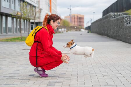Clever puppy Jack Russell Terrier plays with the owner on the street. A purebred shorthair dog jumps into the arms of a European woman in a red tracksuit. In move.