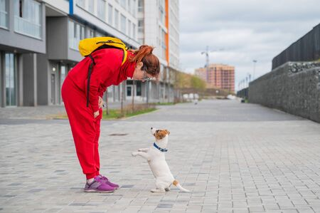 Puppy Jack Russell Terrier performs the command. A small funny dog in a blue collar plays with the owner while walking. The perfect companion. A female dog handler is training a smart pet. Foto de archivo