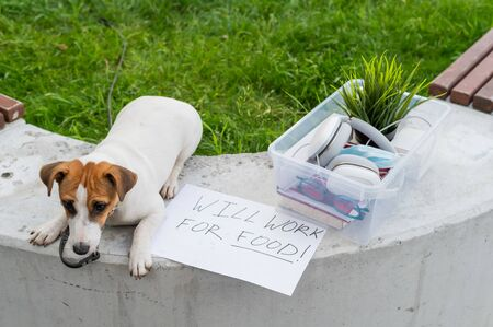 The unfortunate dog is sitting next to a box of personal items from the desktop and a sign I will work for food. Unemployment and the economic crisis during the spread of coronavirus infection. Archivio Fotografico