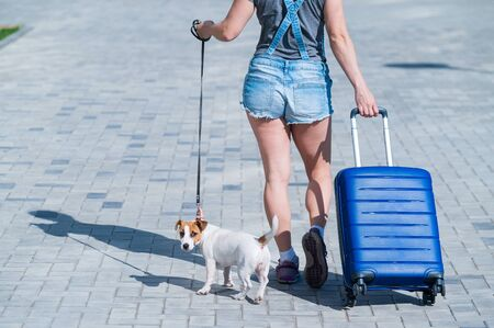 A faceless woman in shorts and sneakers is walking with luggage in hands and a puppy Jack Russell Terrier on a leash. Female legs, blue suitcase on wheels and a dog on the sidewalk. Travel with a pet. Standard-Bild