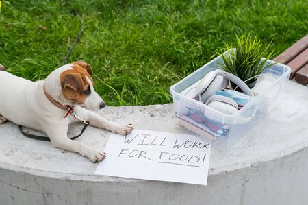 The unfortunate dog is sitting next to a box of personal items from the desktop and a sign I will work for food. Unemployment and the economic crisis during the spread of coronavirus infection. 스톡 콘텐츠