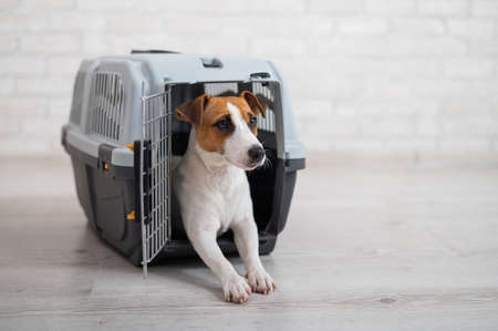 Dog jack russell terrier inside a travel carrier box for animals