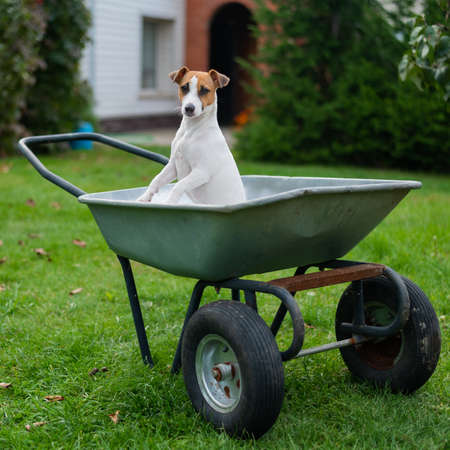 The dog sits in a garden cart in the countryside
