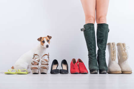 The concept of changing seasonal shoes. A woman tries on winter boots from her collection. Female feet with a row of shoes and a jack russell terrier dog