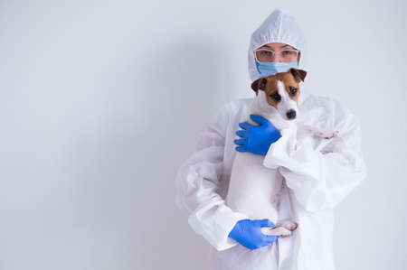 A woman in a protective suit and mask is holding a Jack Russell Terrier dog on a white background Stok Fotoğraf