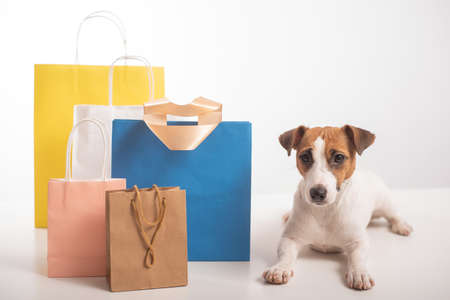 Jack russell terrier dog lies next to different paper bags on a white background. Sale season.