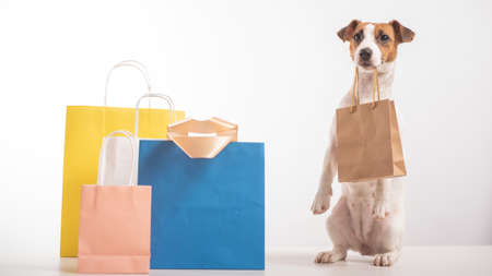 Dog Jack Russell Terrier stands in a serve pose next to paper bags and holds a craft bag in its mouth on a white background. Sale season