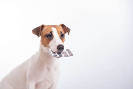 Little doggy Jack Russell Terrier with a blister of pills in his mouth on a white background. Veterinary treatment