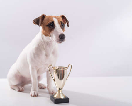 Jack russell terrier dog sits next to the winner cup at the show on a white background 写真素材