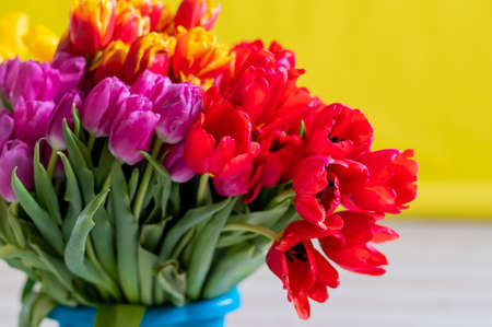 An armful of multi-colored tulips on a yellow background. A large bouquet for a woman on March 8. International Womens Day 写真素材 - 163723543