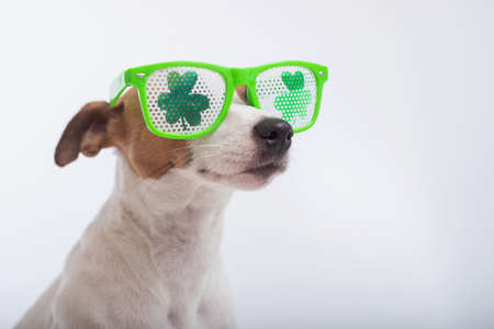 Portrait of a dog jack russell terrier in funny glasses on a white background. Saint patricks day holiday concept Banque d'images