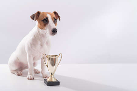 Jack russell terrier dog sits next to the winner cup at the show on a white background Banque d'images