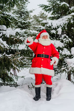 Surprised Santa Claus walks through a snowy coniferous forest at the North Pole in Lapland. Merry Christmas. Postcard.