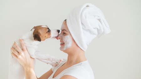 A woman with a towel on her hair and a clay mask is holding a dog. Jack Russell Terrier licks the mask from the owner face.