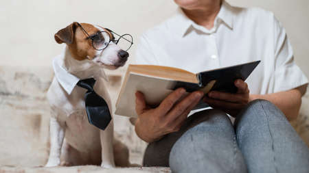 Elderly caucasian woman reading a book with a smart dog jack russell terrier wearing glasses and a tie on the sofa