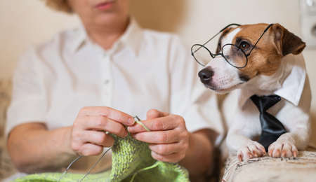 Dog jack russell terrier in glasses and a tie next to an elderly caucasian woman with knitting