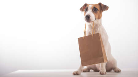 Portrait of dog jack russell terrier holding a paper craft bag in its mouth on a white background