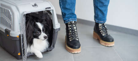 Dog papillon in a cage for safe transport.