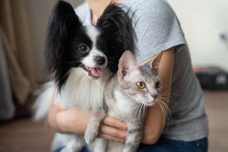 A woman holds in her hands a brush sphinx cat and a papillon dog