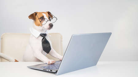 Dog jack russell terrier in glasses and a tie sits at a desk and works at a computer on a white background. Humorous depiction of a boss pet.