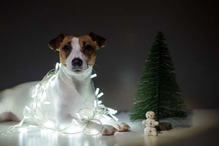 Jack russell terrier dog on a garland next to a small tabletop artificial tree on christmas eve