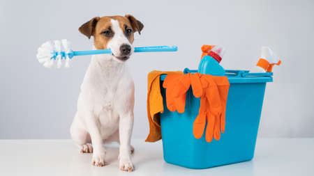 Cleaning products in a bucket and a dog holding a toilet brush on a white background.