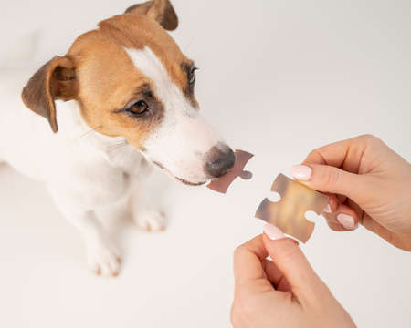 A loyal dog holds a piece of the puzzle, and the owner holds the second. Jack russell terrier and a woman form a single whole.