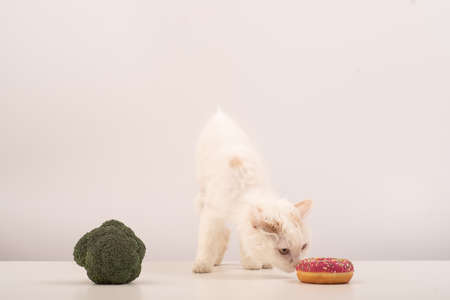 The cat chooses between correct and unhealthy food on a white background. Donut or broccoli 写真素材