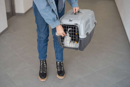A woman is holding a travel cage with a dog inside. Holidays with a pet. Papillon dog butterfly.