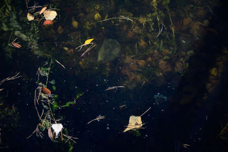 River water in mud and algae. texture. Stockfoto