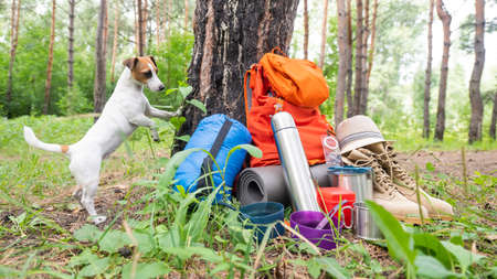 Dog and camping equipment in a pine forest. Backpack, sleeping bag, compass, hat and shoes.
