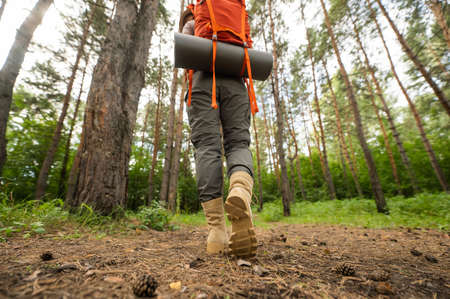 The woman is engaged in hiking in a pine forest. close-up of legs,