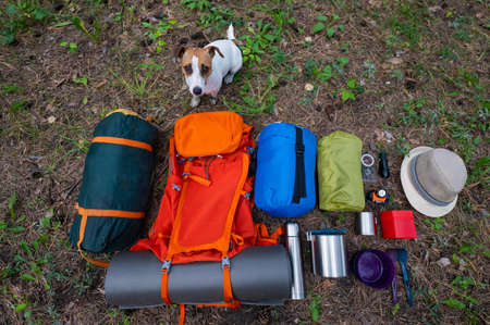 The dog sits by the hiking gear. View from above. Pine forest 写真素材