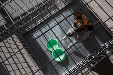 Sad dog Jack Russell Terrier sits in a cage and waits for food at an empty bowl. View from above 写真素材