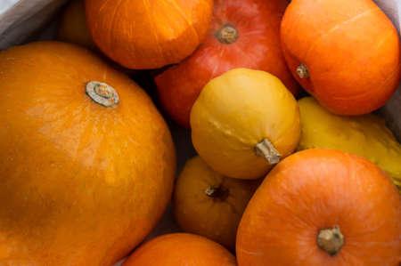 Several ripe pumpkins for Halloween. Autumn harvest.