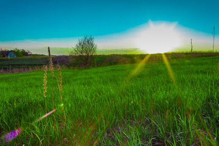 suns: the suns rays on the slope of green grass
