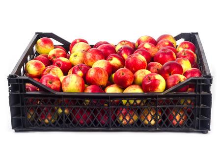 Crate avec des pommes rouges sur un fond blanc Banque d'images - 65100578