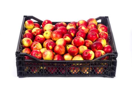Crate avec des pommes rouges sur un fond blanc Banque d'images - 65100756